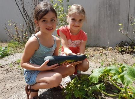 Sommer im Schulgarten