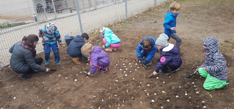 600 Blumenzwiebeln für den Schulgarten