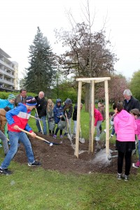 Pflanzaktion bei Aprilwetter: Die Klasse 4a hilft Bürgermeister Dr. Adolf Bauer beim Pflanzen einer Winter-Linde. Bild: Georg Wagenbrenner